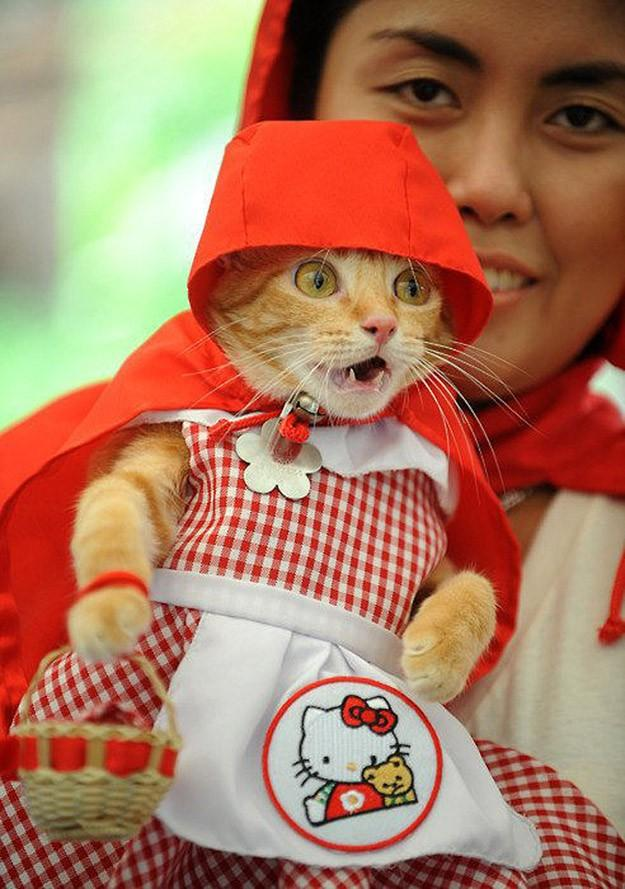 100 Best photos of cats of all time
